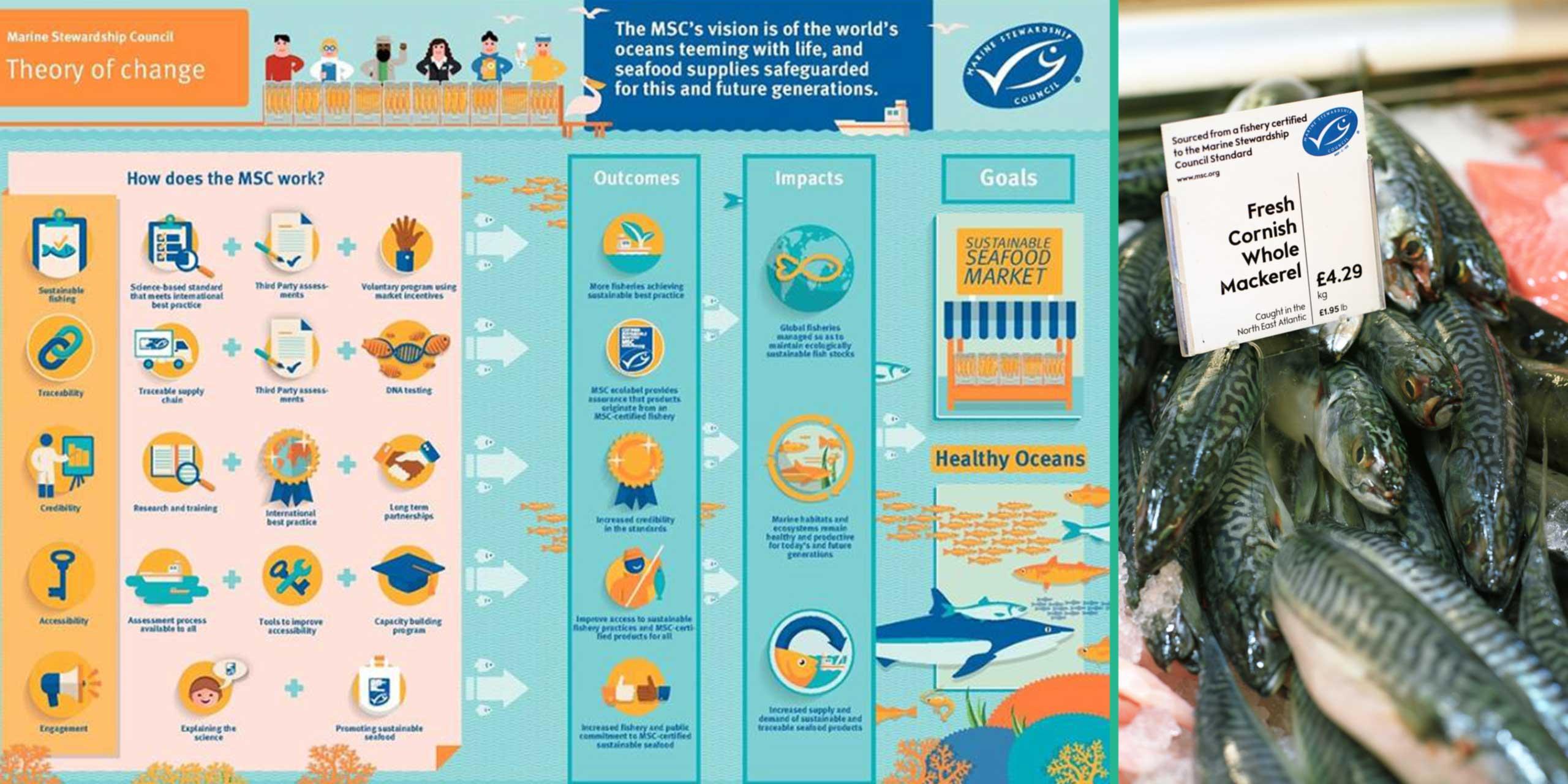 http://skollworldforumorg.c.presscdn.com/wp-content/uploads/2014/02/marine-stewardship-council-sl2.jpg